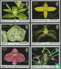 2004 Orchideeën (JER 239)