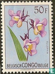 Bloemenreeks. Veelkleurige bloemen kopen