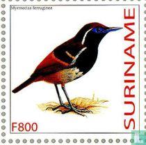 Roodrugmiervogel