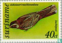 Spot-tailed nightjar