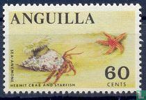 Hermit crab and starfish