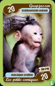 krabben etende makaak
