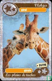 silver star : giraf