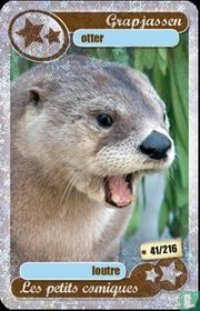 silver star : otter